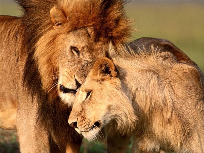 Relação entre machos e fêmeas no mundo animal